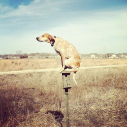 (via Maddie The Coonhound Project | Abduzeedo Design Inspiration & Tutorials)