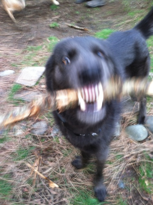 Jude Wolfdog Dogbeasts Those feet Hellhound
