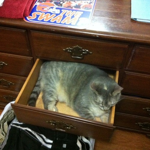 "acepilot388:  ""I forbid you from putting laundry away"""