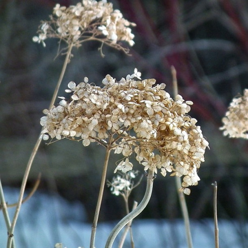 Dry flowers in High Park (Toronto, Canada. Gustavo Thomas © 2013) on Flickr.