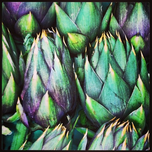 frankprisinzano:  Carciofi sono fiori. Artichokes are flowers and like flowers the buds come in many different shapes, colors and sizes. These are just magnificently masculine. Like an English dandy with a cane and top hat. Or an Italian gentleman in a tweed suit with a crisp shirt and cardigan sweater. God I love food, the comparisons to fashion and art end only with the imagination. #artichokes #carciofi #fiori #flowers #fashioncollideswithfood #foodporn #instafood #market #mercato #mantova   (at Mantova)