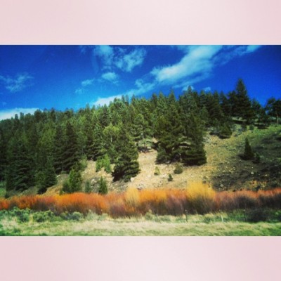 I was #mesmerized by these rainbow bushes in southern #Colorado. I've never seen them before! Can anyone tell me what they are??
