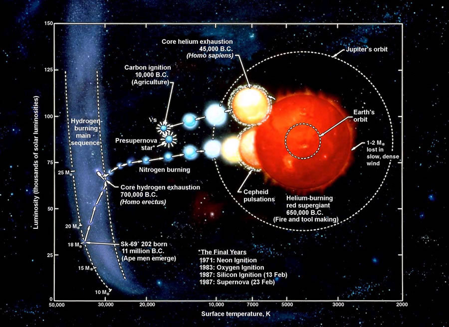SN 1987 A - Supernova  This image depicts the life cycle of the star. While this particular image is based on what is believed to be the typical lifecycle of this particular star, the past 20 years of research into the explosion that caused SN1987a supports this model. It is interesting to see how this particular star lived its life relative to the HR Diagram, and how quickly this star died once the core was exhausted of its supply of Hydrogen.