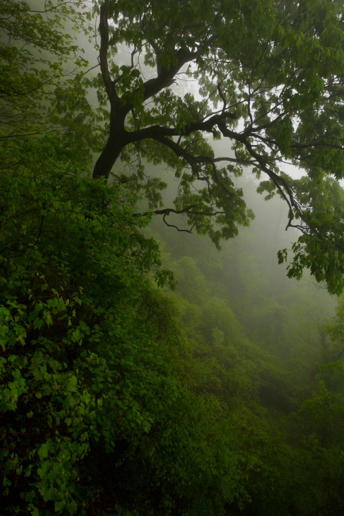 unwrittennature:  Laurel Highlands: Misty hillside (by Shahid Durrani)