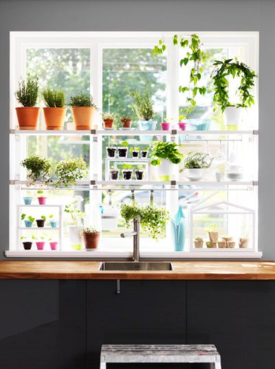 kitchen window shelves filled with aromatic plants. from Ikea summer 2013 collection.