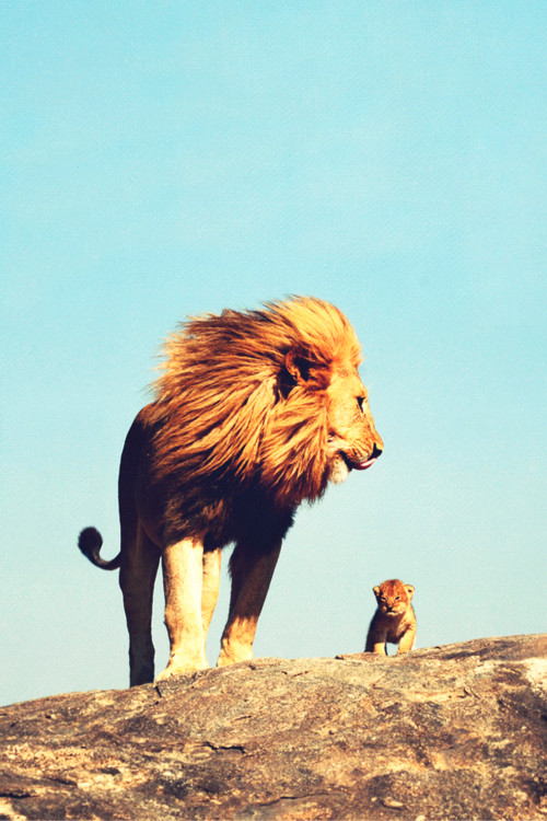mavertrick:  Mufasa and Simba