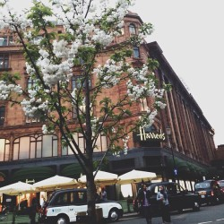 atoomah:  Spring 🌸 (at Harrods)