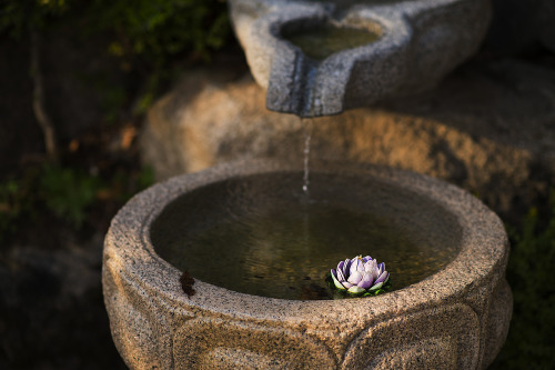 bwook1:  * Lotus flower - Nikon D4. < Gilsangsa Temple, Seoul, Korea. / Apr. 2013 >