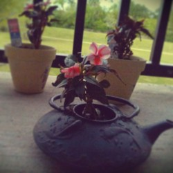 My pretty flowers for my patio! I'm putting an old teapot to work again! It was really rusty so I figured it would make a great pot.