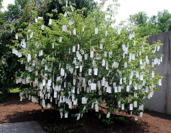 softpyramid:  Yoko OnoWish tree(Installation at the Hirshhorn Museum) 2007