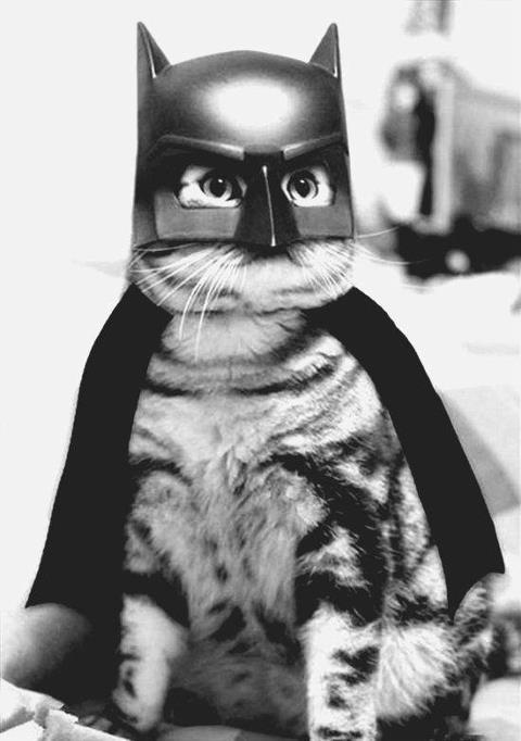 retrogasm:  Bat Cat