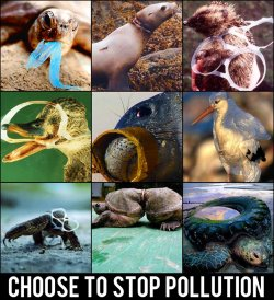 Choose To Stop Pollution, Save Our Waters & all in it!Today we also look at the pollution in seas. We all like a picnic at the beach , a boat ride or a cruise. But some of our actions are creating a big disaster for sea life. Please don't throw garbage of any kind in rivers , lakes or seas. The impact of pollution is much higher in water than on land.Get Involved:Always cut up your pack ringsPick up litterTell others not to litterThrow fishing line away properlyKeep streets cleanClean up waterways with help from Adopt-a-River etchttp://www.dnr.state.mn.us/adoptriver