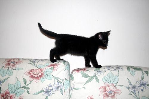 kitty cat animals cute cats kitten animal kittens kitties Black Cat fluffly