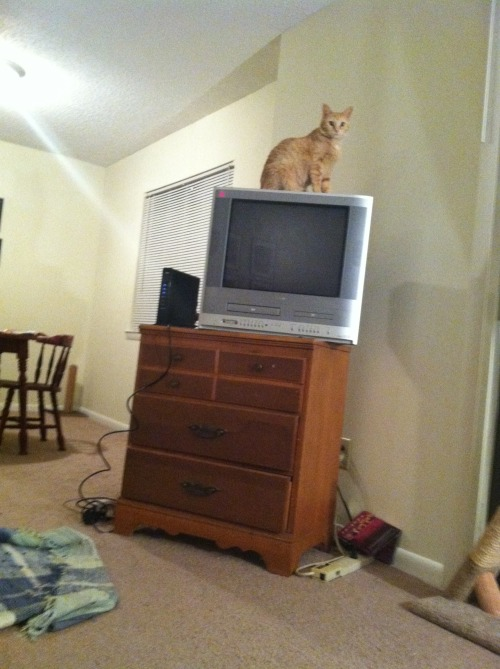 get down from there cat! you're supposed to watch tv not sit on it!