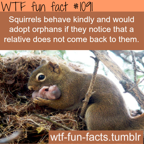 wtf-fun-factss:  (source click here) squirrels facts  -  the kindness of squirrles  MORE OF WTF-FUN-FACTS are coming HERE funny and weird facts ONLY