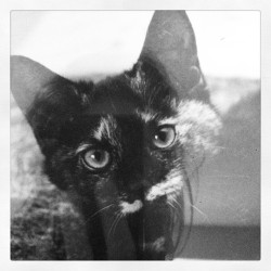 Rest In Peace Teedee Girl. Miss you! 🐱❤
