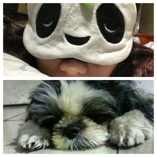 Trust me, i'm the better panda… Hahaha.. ;) #instashihtzu #shintzu #panda #pandamask #eyemask #dogstagtam #instapets #petstagram #ilove #mocharoo #igers #igcebu #igersasia #igerscebu #igersphilippines #blackandwhite