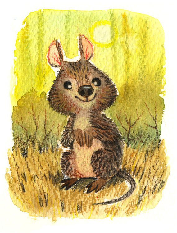 Quokka - Watercolours & crayons, kinda liking the rough watercolour paper after all.