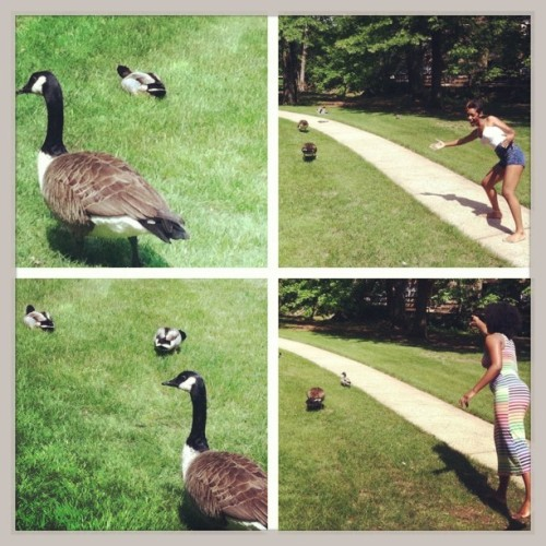 me and ash with Dennis and Martha, the geese and Dorris and Debbie, the ducks!! 😁