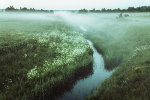 Morning fog by Dmitri Korobtsov on Flickr.