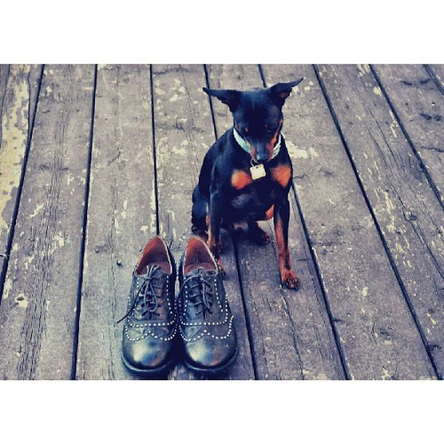 Doggy #cutepets #fashion