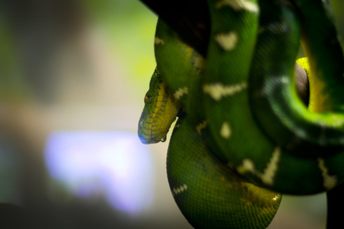 audiotography:  Snake at the Oakland Zoo