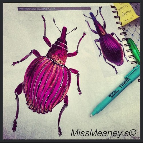 More bugs 🐞😊🐞#beetle #pink #insect #pen #mixedmedia #ink #art #artwork #instart #drawing #missmeaneys #inspiration