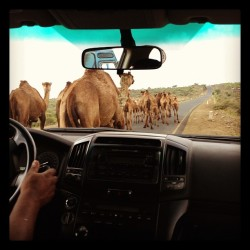 Traffic Jams on the way to Sidamo. #thebookproject #research #ethiopia #cultureofcoffee
