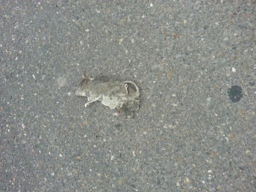 Deadmouse
