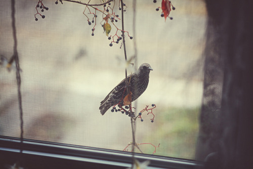 stashofcoffee:  untitled by AnyDirectFlight on Flickr.
