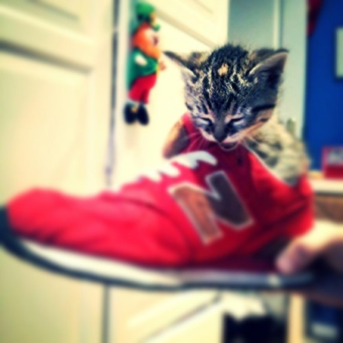 "thefluffingtonpost:  Kitten's New Kicks Don't Fit A kitten named Oscar was disappointed when he opened a box from Zappos Monday morning to find the sneakers he ordered were far too big. ""He almost fit inside one of the shoes,"" says Stacy Fournier, a friend of the kitty who had come over to see the new kicks. ""I guess he had ordered a men's size 8, when he's actually a kitty size 8."" It's of little consequence, since Zappos offers free shipping on all returns. Still, Oscar was hoping to start his new jogging regimen this week. It will have to wait. Via michaelquinminguela."