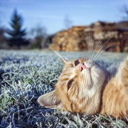 cat photography animals cute cats kitten nature kittens magical-meow