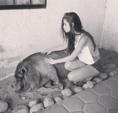 camicurry:  Meet my piggy boy, Eugene.