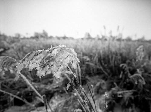 adventuresinfilm:  Wicken Fen. on Flickr.