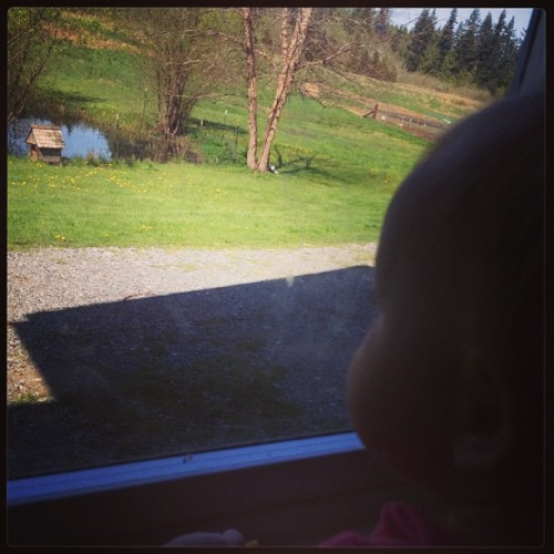 Looking for the duck. #baby #duck #nannylife #spring