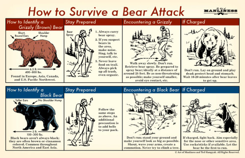 artofmanliness:  (via How to Survive a Bear Attack: An Illustrated Guide | The Art of Manliness)  This is indeed is a manly thing to know.