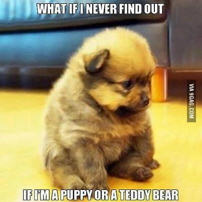 9gag:  Puppy or Teddybear?  Awwww