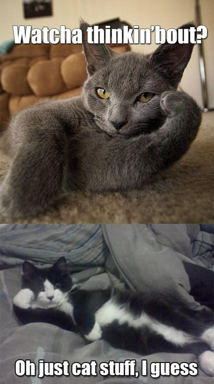 fuckyeahcuteanimalss:  (via I Can Has Cheezburger? - Lolcats n Funny Pictures - funny pictures - Cheezburger)