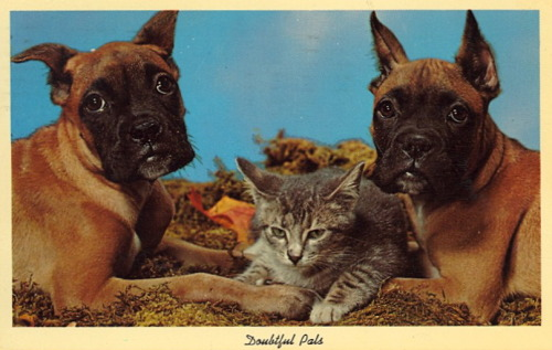 "bad-postcards:  DOUBTFUL PALS  ""There had better be a LOT of tuna in my dressing room"""