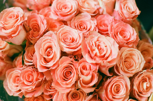 marisais:  roses by marita.cavarubias on Flickr.