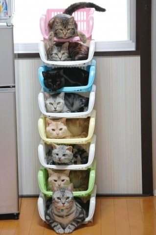 storagegeek:  Kitty storage. One of four adorable pictures from Taildom.com.