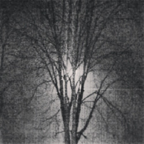 #snow #nemo #light #night #trees #creepy #photography #square #shadow #forms