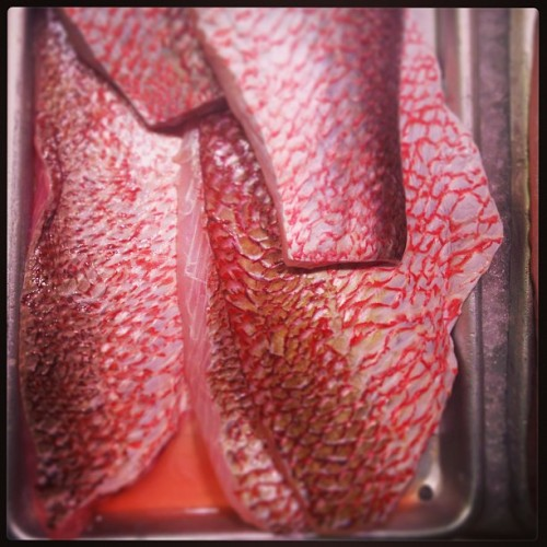The beautiful coral scales of wild red snapper @eataly #eataly #seafood #eatalynyc  (at Eataly)