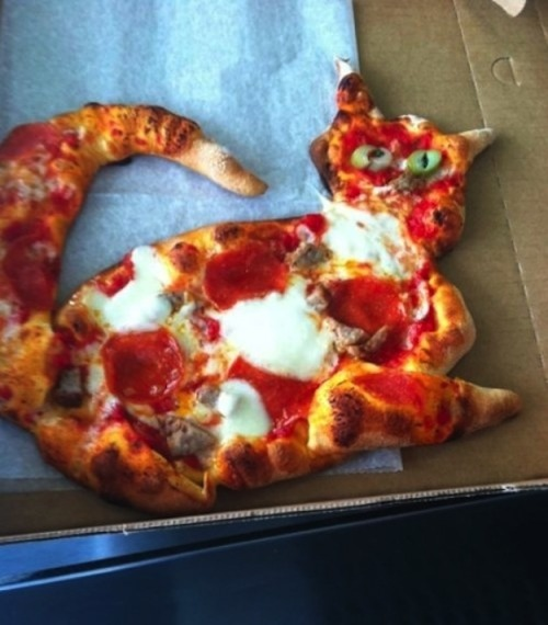 This pizza cat is all of my favorite things at once.