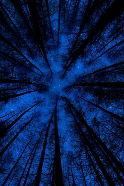 Forest Sky at Night | by dylanarnallt.
