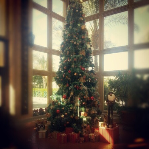 One beautiful Xmas tree #Christmas #Xmas #photooftheday #instadaily
