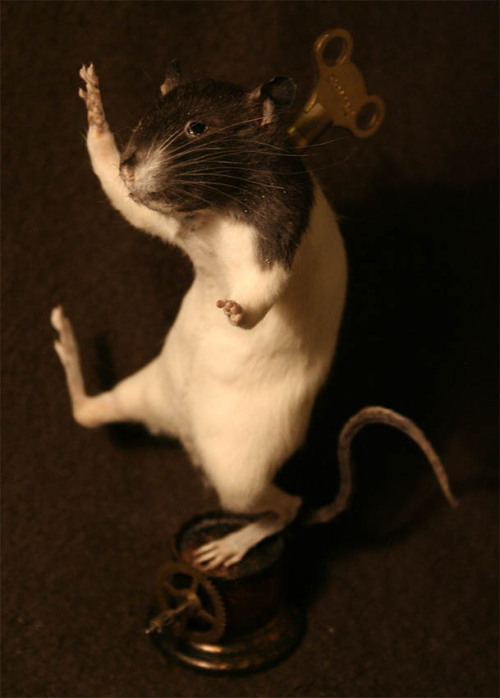 Taxidermy Clockwork Rat