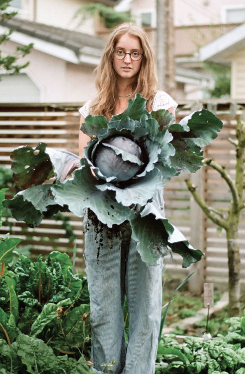squaremeal:  (via Ms. Chatelaine Lisa Giroday is a hip, urban farmer)  That's one heck of a cabbage