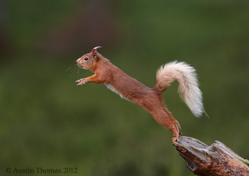 magicalnaturetour:  The balancing act… by Austin Thomas:)