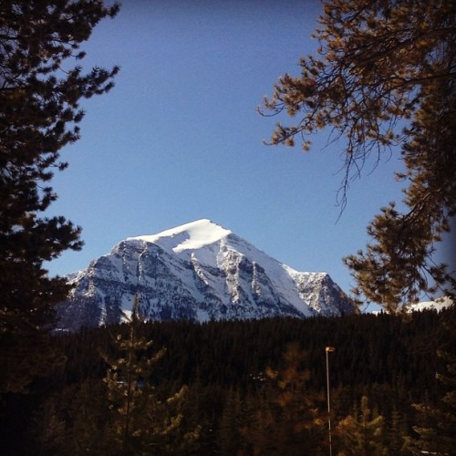 My front yard #mountain#rockies#blue#sky#sunny#canada#scenic#beautiful#travel#front#yard (at Lake Louise Village)